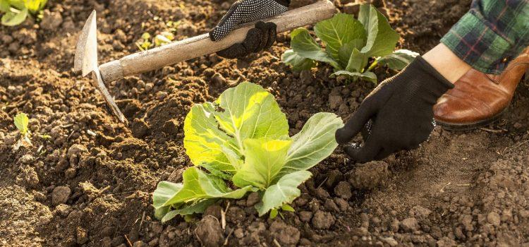 Lipiec w ogrodzie – co robimy?