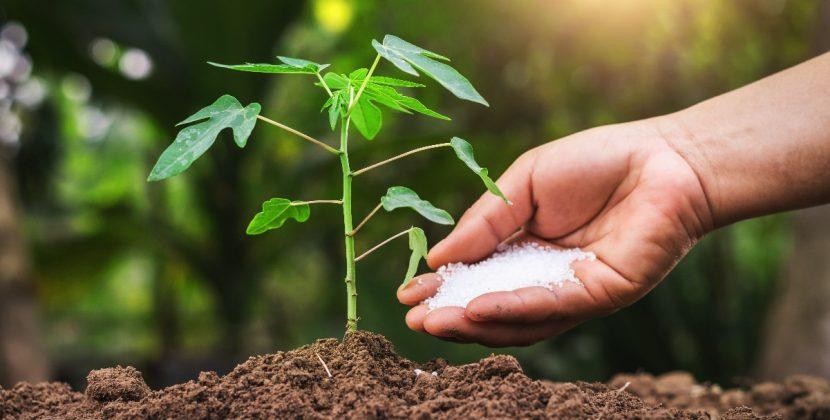 Naturalne nawozy dla roślin doniczkowych