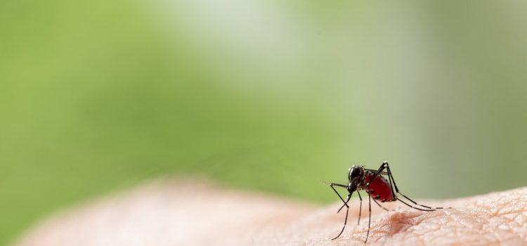 Domowe sposoby na zwalczanie komarów