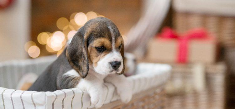 Jak samodzielnie zrobić legowisko dla psa?