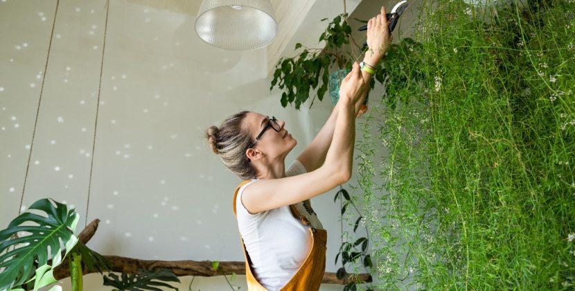 Pnącza w domu - które rośliny wybrać?