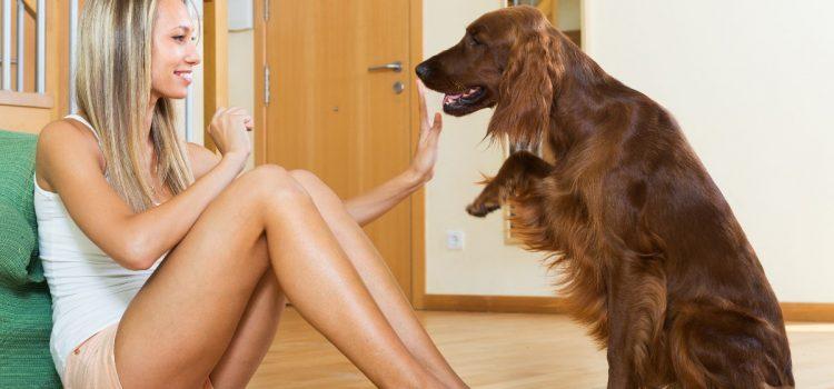 5 prostych sztuczek, których Twój pies nauczy się w mig!