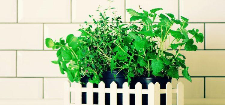 Parapet – miejsce na Twój pierwszy zielnik w kuchni!