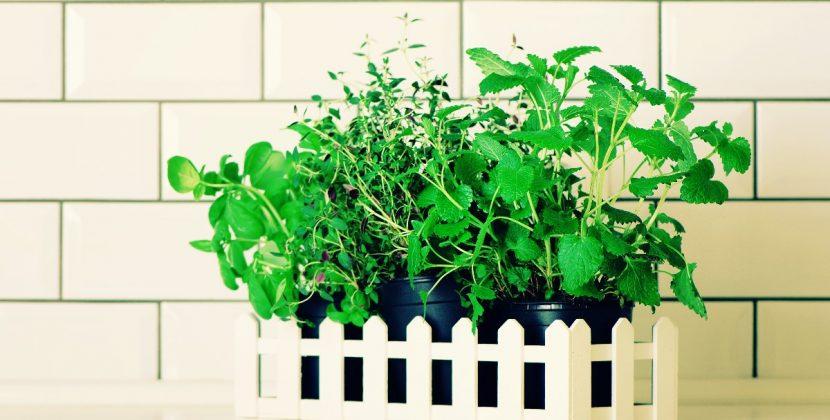 Parapet - miejsce na Twój pierwszy zielnik w kuchni!