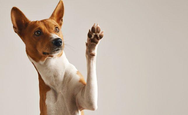 Pies dla alergika - 5 ras, które warto wziąć pod uwagę