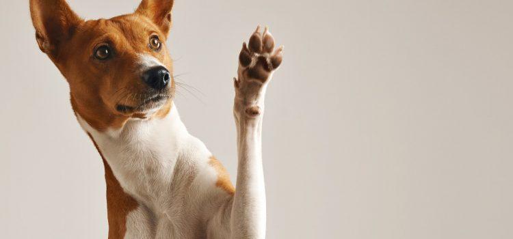 Pies dla alergika – 5 ras, które warto wziąć pod uwagę