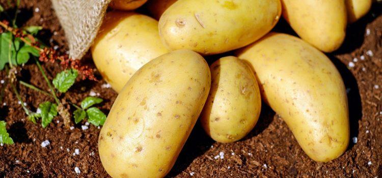 Ziemniaki – kaloryczne czy zdrowe? Fakty i mity