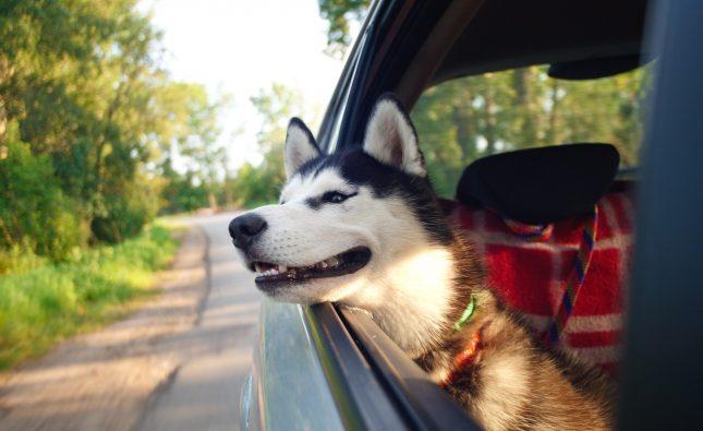 Co zabrać na wyjazd z psem?