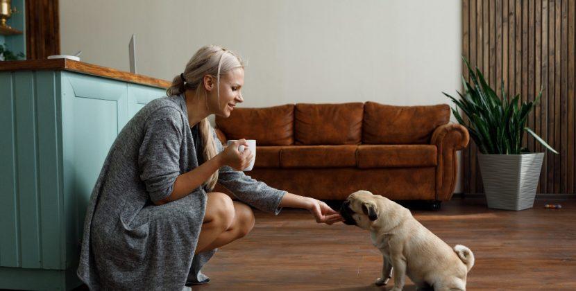 Co musi zawierać dieta szczeniaka?