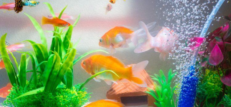 Jakie ryby wybrać do małego akwarium?