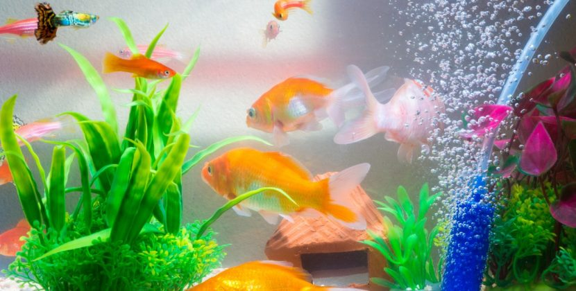 Jakie ryby do małego akwarium wybrać?