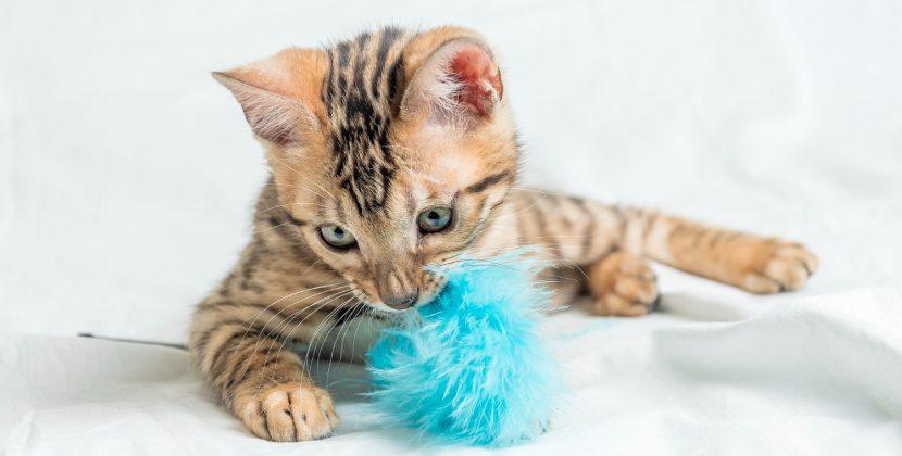 Myślisz o adopcji kota? Sprawdź, jak się przygotować