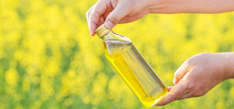 Olej rzepakowy a słonecznikowy – jaka jest różnica?