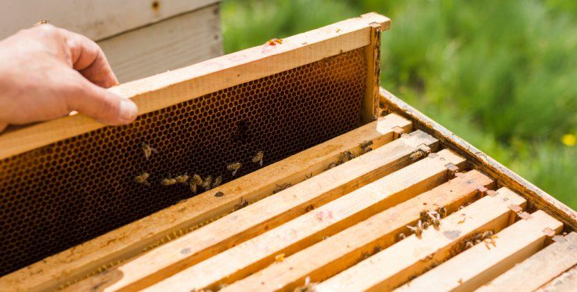 Na dachu sklepu IKEA zamieszkają... pszczoły!
