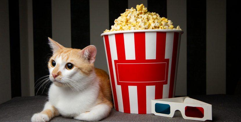 Najlepsze filmy o kotach – które warto obejrzeć?